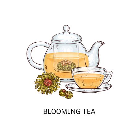 Herbal tea types concept with glass hand drawn teapot and cup and blooming tea sketch vector illustration isolated on white background. Can be used for menu and package.