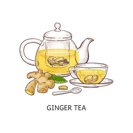 Ginger tea - healthy hot drink in glass teapot and cup hand drawn in cartoon style, fresh sliced root plant in traditional herbal beverage. Isolated vector illustration