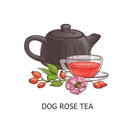 Dog rose tea - berry fruit beverage drawing in glass teacup and brown teapot with red berries, pink flower and green leaves on a branch, hand drawn isolated herbal drink still vector illustration Illustration