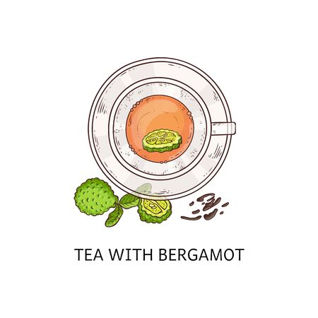 Tea with bergamot in glass cup - top view drawing. Healthy herbal leaf drink with cut up green citrus fruit and leaves, isolated hand drawn vector illustration Illustration