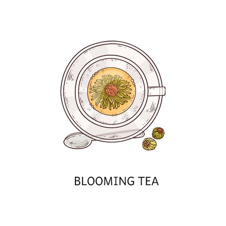 Blooming tea - top view of glass cup with open flower inside yellow drink, healthy hot drink in flowering and dry form - exotic plant blossom beverage and bud drawing - isolated vector illustration