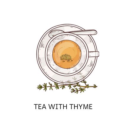 Tea with thyme in glass cup - top view drawing with leaf twig arrangement, yellow hot healthy herb beverage in teacup, plate and spoon set, isolated hand drawn vector illustration