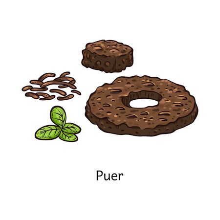 Puer tea drawing in fresh and compressed form, brown donut shape disk of dry pressed plants and fresh green leaves, traditional Chinese drink ingredient - isolated vector illustration