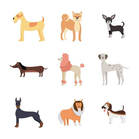 Cartoon dog breed set isolated on white background - colorful pet animals standing and smiling. Dalmatian, poodle, chihuahua and other dogs - flat vector illustration.
