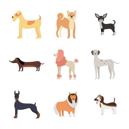Conjunto de raza de perro de dibujos animados aislado sobre fondo blanco - coloridos animales de compañía de pie y sonriendo. Dálmata, caniche, chihuahua y otros perros - ilustración vectorial plana.