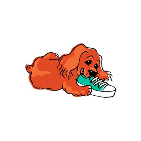 Cute funny dog or puppy nibbles owners boot Illustration