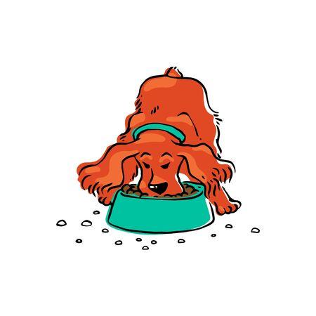 A cute brown spaniel eats dog food from a bowl. Spaniel dog pet behavior Illustration