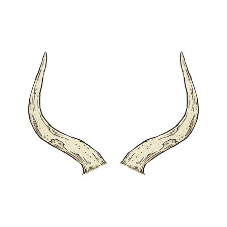 Animal horns isolated on white