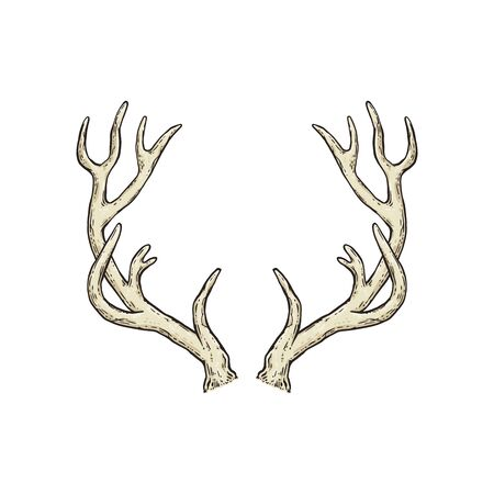 Deer antlers drawing isolated on white