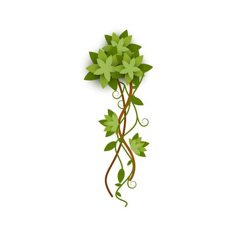Tropical jungle plant or green lianas branch with leaves woven and beautifully twisted