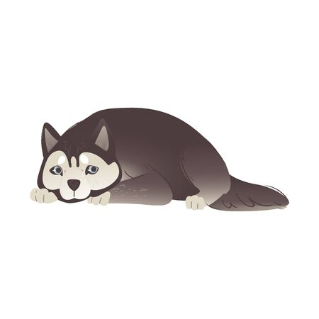 Alaskan Malamute or siberian husky cute dog laying