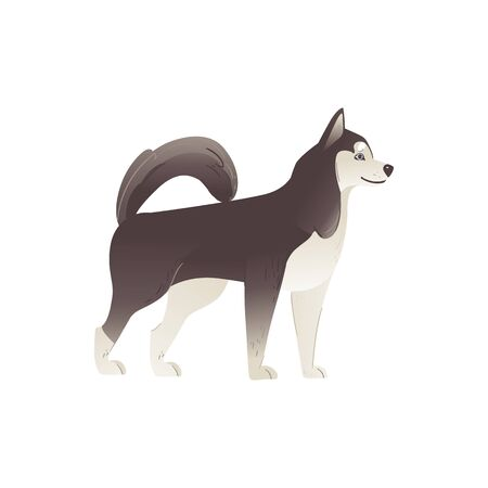 Alaskan Malamute or siberian husky cute north pedigree dog flat cartoon