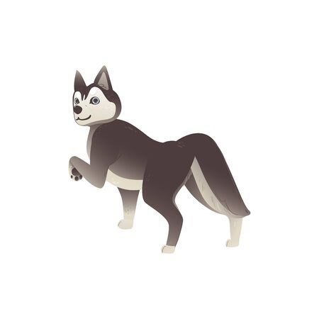 Pet husky dog walking away and looking back - cute cartoon animal with grey and white fur and friendly face isolated on white