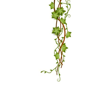 Green jungle vine climbing down with entwined branches with flowers and tendril.