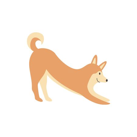 A cute brown shiba inu dog smiles and stretches. The Shiba Inu pet is doing yoga, asana and dog pose with its face down. Isolated vector illustration of an animal. Illustration