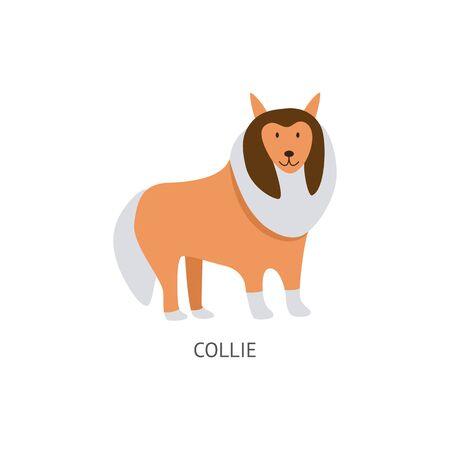 A cute collie dog stands, pet and animal. Brown happy pet friend, dog breed concept. Isolated cartoon collie vector illustration.