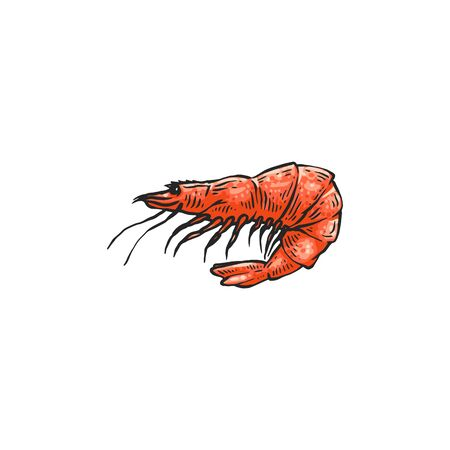 Cartoon shrimp drawing isolated on white background - pink prawn in hand drawn sketch style. Crustacean sea animal from side view - flat vector illustration.  イラスト・ベクター素材