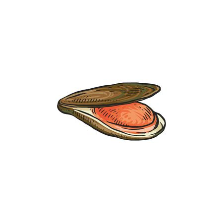Hand drawn brown oyster or mussel isolated on white background - sea shellfish drawing of open clam showing pink inside, flat vector illustration.  イラスト・ベクター素材