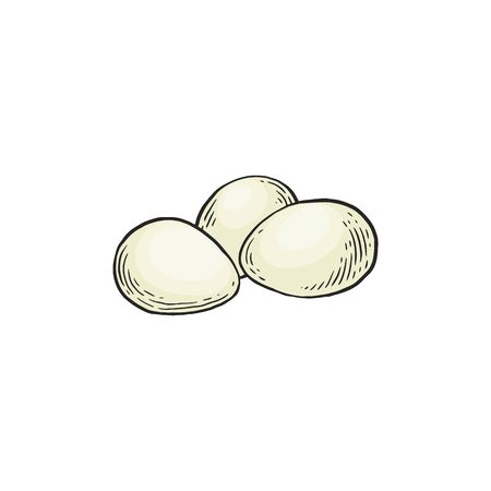 Chicken white eggs vector hand drawn illustration in sketch style isolated on white background. Organic low carb, high protein nutrition ingredient for ketogenic diet. Illustration