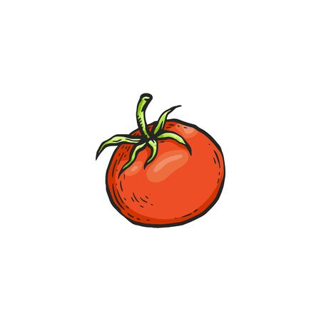 Red cartoon tomato - isolated sketch drawing of colorful vegetable with green leaves on white background, flat hand drawn vector illustration of food ingredient.