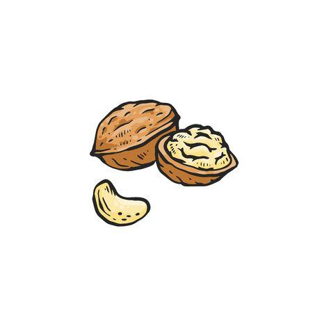 Bruine walnoot tekening geïsoleerd op een witte achtergrond - geheel en in tweeën gesneden rauwe noot voor gezonde voeding. Hand getrokken schets voedsel vectorillustratie.