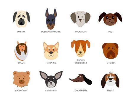 Cartoon dog breed set - cute pet animal heads of different breeds with written names. Hand drawn dogs isolated on white background - flat illustration