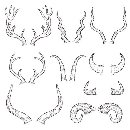 Hand drawn animal horn set - black and white sketch style collection of deer, cow, buffalo, reindeer, moose and other antlers. Ilustração