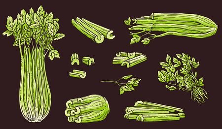 Celery drawing set - green hand drawn vegetable collection in whole, chopped up form. Leaves and stalks isolated on black background - flat vector illustration.