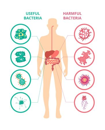 Useful and harmful bacteria - human body poster with internal organs showing good and bad bacteria living insiga. Medical infographic - flat isolated vector illustration. Illustration
