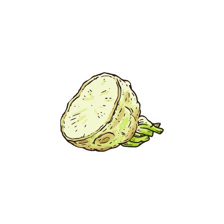 Hand drawn raw celery root plant cut up in half - fresh food seasoning ingredient drawing isolated on white background. Simple flat vector illustration. Ilustração