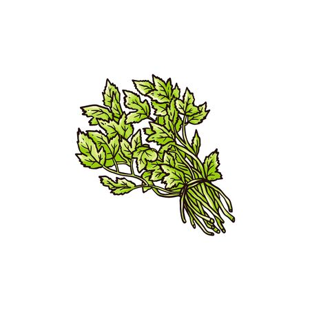 Green celery leaves bunch in hand drawn sketch style isolated on white background - fresh healthy herb heap for food seasoning. Flat vector illustration.