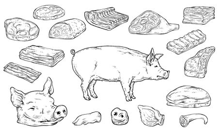Severed big body parts and meat cuts in colorless hand drawn sketch style - chopped pork steak cut types isolated on white background. Vector illustration.