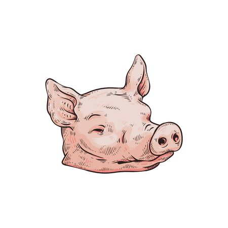 Severed pink pig head isolated on white background - dead farm animal body part with closed eyes from butcher shop. Flat hand drawn vector illustration.