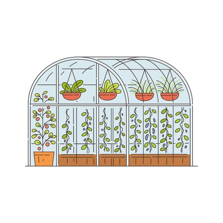 Glass greenhouse with growing plants in pots, cartoon sketch vector illustration isolated on white background. Agriculture technology for vegetables and flowers growth. Ilustracja