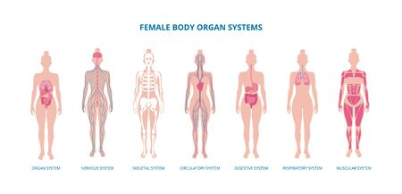Female body infographic set - skeleton, muscles and internal organs, flat vector illustration isolated on white background. Medical biological banner of organism systems.