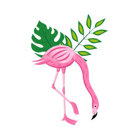 Pink flamingo with green tropical leaves isolated on white background - exotic cartoon bird standing on one leg bending over with plant foliage. Flat vector illustration. 向量圖像