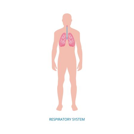 Respiratory system - human organ anatomy diagram of cartoon man with pink lungs in chest. Flat medical vector illustration isolated on white background. Illustration