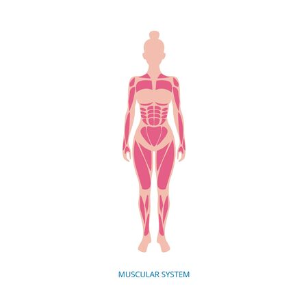 Muscular system - muscles anatomy of female body isolated on white background. Sport medicine diagram of muscle groups in young woman - flat vector illustration.