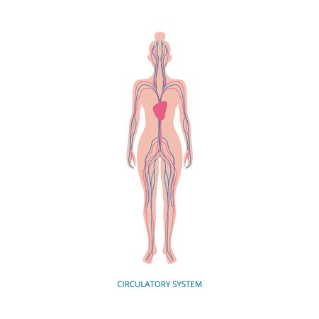 Circulatory system - human anatomy diagram on female body with heart and blood flow artery and vein structure. Isolated flat vector illustration on white background.