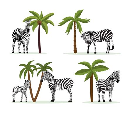 Set of zebra animals in wildlife cartoon characters, flat vector illustration isolated on white background. African Zoological symbols collection for prints.