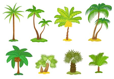 Set of tropical green palm trees cartoon icons, vector illustration isolated on white background. Summer plant element for beach vacation and traveling topics design.