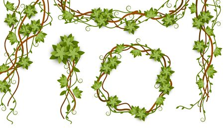 Jungle vine isolated frame set with tropical plant liana branches, green leaves and flowers in round and straight shapes on white background, nature collection vector illustration