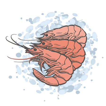 Vector illustration of red unpeeled shrimps in sketch style laying on blue abstract background isolated on white - hand drawn cooked prawns for seafood market or restaurant design. Çizim