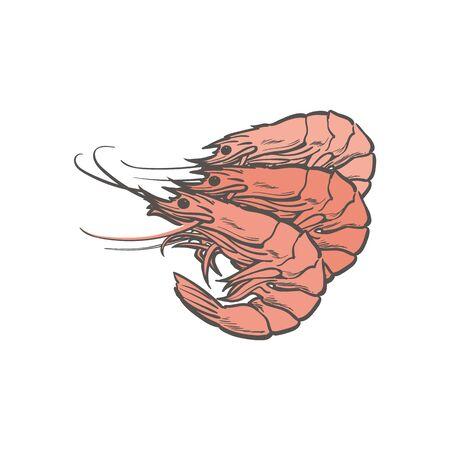 vector sketch sea red shrimps. Hand drawn seafood delicacy, restaurant and marine cuisine cafe menu decoration design. Underwater crustacean ocean animal, healthy gourmet food. Stock Illustratie