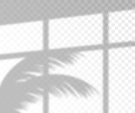 Lighting overlay palm tree shadow mockup, 3d realistic vector illustration isolated on transparent background. Tropical leaves and window sunlight effect template. Stock Illustratie
