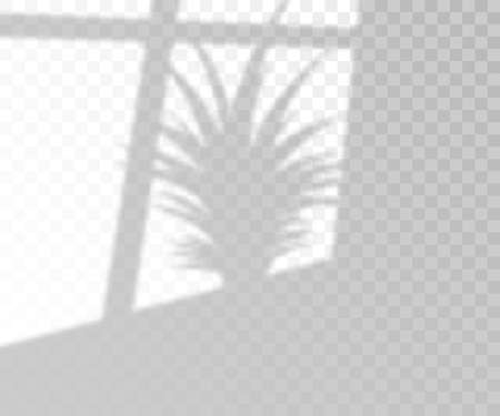 Natural lighting overlay palm tree shadow, 3d realistic vector illustration isolated on transparent background. Tropical leaves on wall sunlight effect template. Çizim