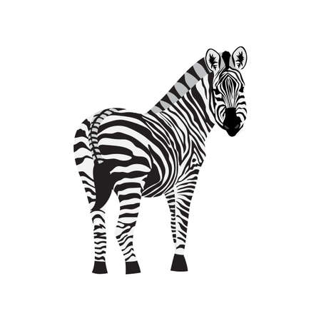 Zebra horse with black stripes standing back to viewer, flat cartoon vector illustration isolated on white background. Wild animal icon for prints and summer design.