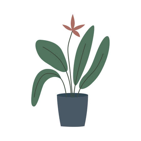 Potted house plant with big green leaves and flower - simple houseplant in blue pot isolated on white background. Home interior decoration - vector illustration. Vettoriali