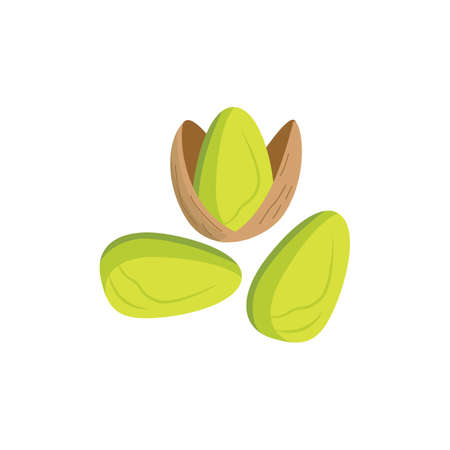 Peeled and in shell pistachios nuts flat vector illustration isolated on white background. Organic vegan food and healthy nut snack image for package design.