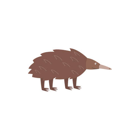 Cartoon echidna - brown Australian wildlife animal from side view isolated on white background. Vector illustration of short beaked spiny anteater from Australia.